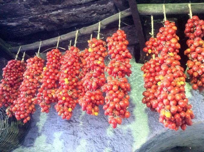 Kirschtomaten an Holzdecke hängend zum trocknen
