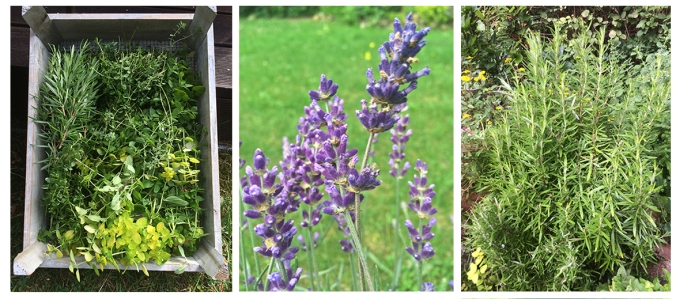 Kiste Lavendel Rosmarin