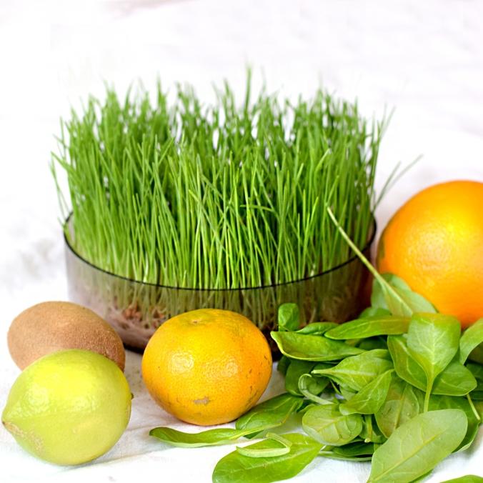 Smoothie mit Weizengras